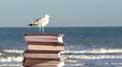 livre et lecture Languedoc Roussillon